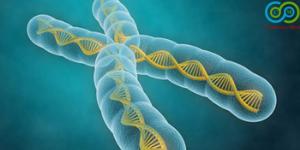 molecularandgenomeevolution