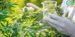 cannabisscienceandtechnology