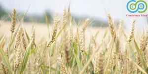 agricultureenvironmentalpractices
